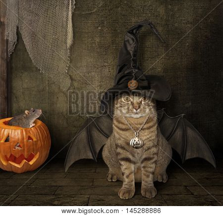 A cat in a hat has a wings. It looks like a bat. A rat sits inside a pumpkin. Today is Halloween.