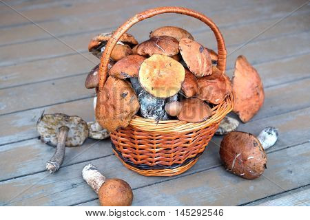 Still life with crop of many edible mushrooms in brown wicker basket on wooden house porch front outdoor front view horizontal