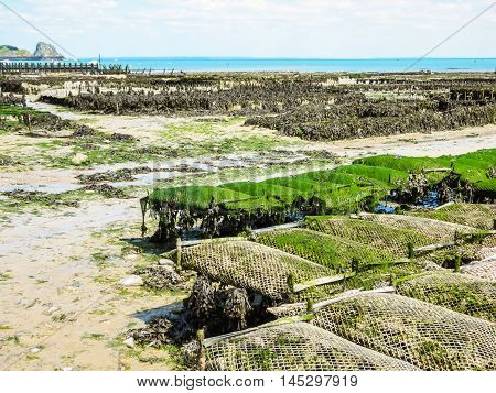 Oyster farms with growing oysters in lowtide. Cancale, France