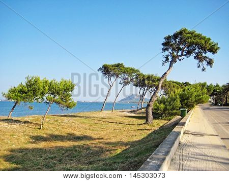 Coast With Trees And Grass Beach Between Alcudia And Pollenca, Majorca