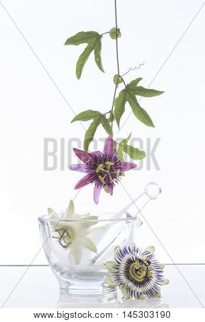 Passionflower Purple use in phytotherapy aromatherapy and alternative medicine