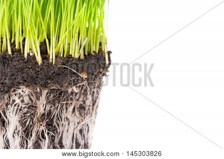 Green Grass And Soil From A Pot