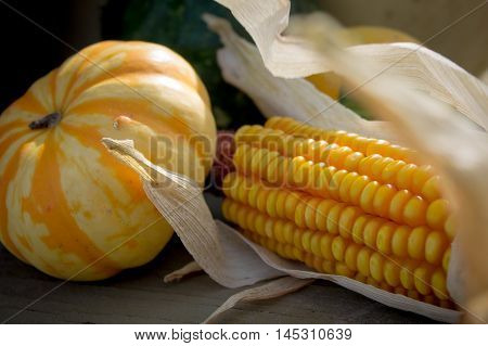 Corn and squash displaying the colors of fall and of the autumn harvest season.