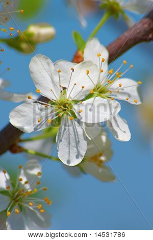White Flower On The Tree