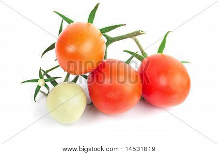 Juicy Perfect Tomatoes
