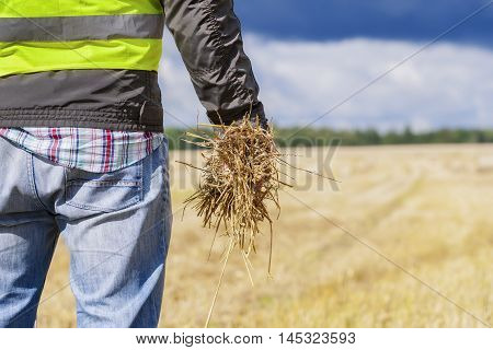 Farmer with straw in hand on field
