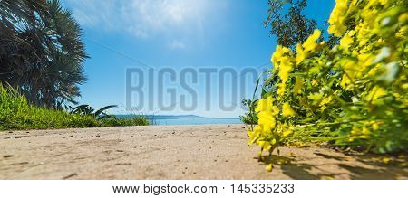 yellow flowers by the shore in Le Bombarde beach Sardinia