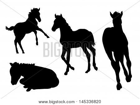Collection of Foal Silhouettes on White Background. Isolated vector illustration animal theme. Four foal silhouettes to choose.