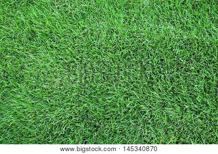 Green lawn , Greensward for a background.