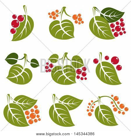 Set Of Vector Green Spring Leaves With Tendrils And Different Sweet Berries. Ecology Theme Design El