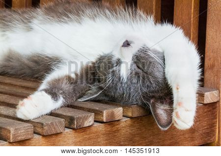 Gray and white fluffy kitten sleeps on his back on a wooden bench on a sunny summer day stretching out legs behind head. Selective focus