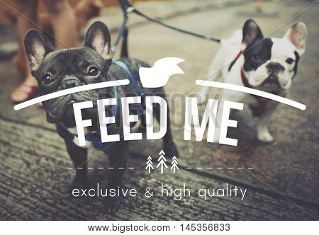 Feed Me Hungry hunger Food Eat Pet Starvation Concept