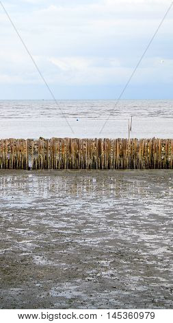 manmade bamboo fence on tropical mangrove beach