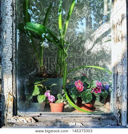 Window of old house in rustical style. There are beautiful flowers in sunlight. Trees reflect in the glass.