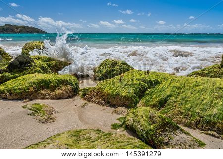 Caribbean beach with teal blue water crashing against algae covered rocks on sand beach.
