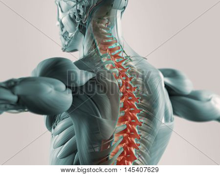 Human anatomy spine pain highlighted in color. 3D illustration.