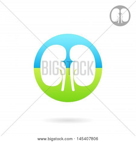 Kidney medical icon 2d vector logo on white background eps 10