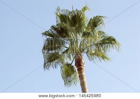 Palm trees and sky in Valencia, Spain.