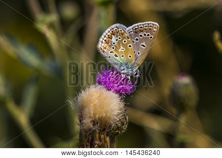 Butterfly Insect Floral Summer Wildlife Meadow Impression