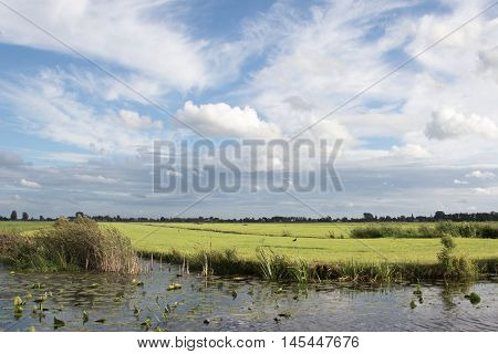 Typical Dutch polder landscape in the evening sun