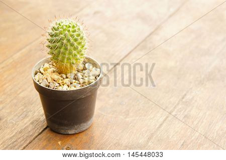 The small cactus less on wooden style vintage