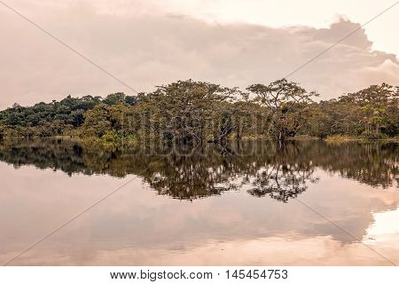 Bushes Reflecting On The River In Flooded Amazonian Jungle Cuyabeno Wildlife Reserve Ecuador