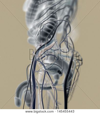 Male urinary and reproductive system. 3d illustration poster