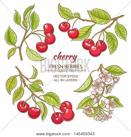 cherry  branches vector set on white background