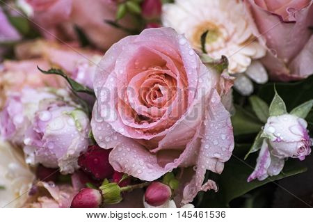 A single pink rose with water drops