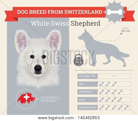 White Shepherd dog breed vector infographics. This dog breed from Switzerland