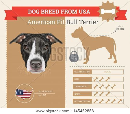 American Pit Bull Terrier dog breed vector infographics. This dog breed from USA