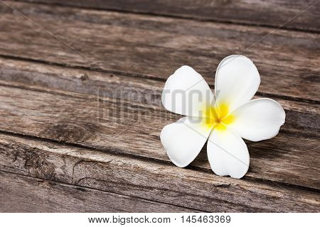 Tropical flowers frangipani on wood background with copy space