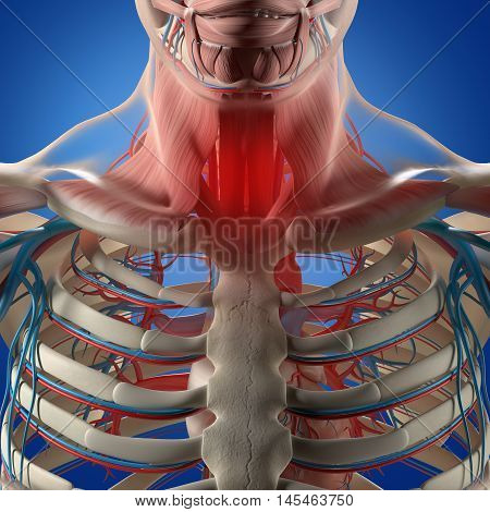 Human anatomy,sore throat infection, chest, rib cage. 3d illustration.