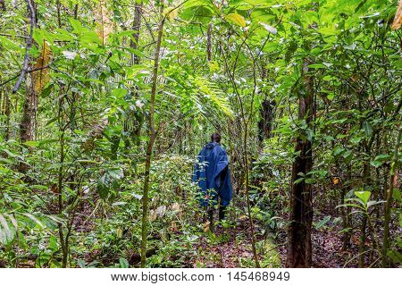 Silhouette Of A Man With A Blue Rain Coat Deep In The Amazonian Jungle National Park Cuyabeno South America