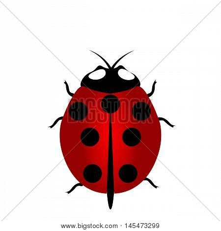 ladybird icon, ladybird icon eps10, ladybird icon vector, Illustration red Ladybug with seven points on the back