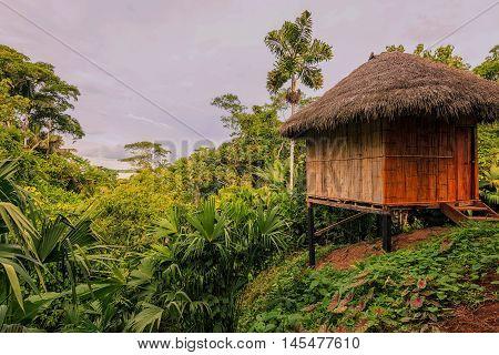 Loge Amazon Rainforest National Park Yasuni South America