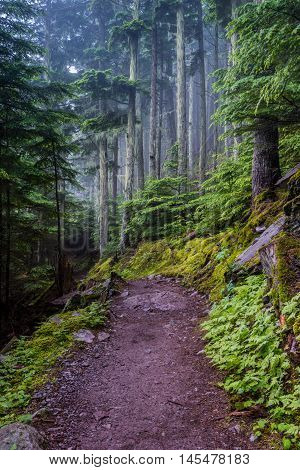 Wet Trail in Foggy Forest climbing up to Avalanche Lake