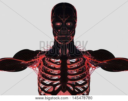 Anatomy muscle, human body, rib cage. Upper body. 3d illustration