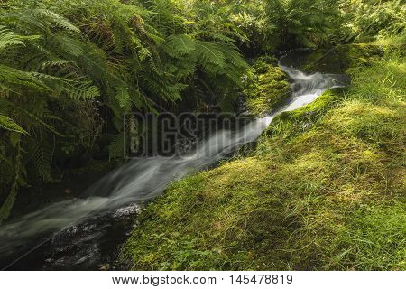 An image of a beautiful woodland brook flowing through Dartmoor shot at Venford Brook, Devon, England, UK. A slow shutter speed was used to capture the milky effect of the water.
