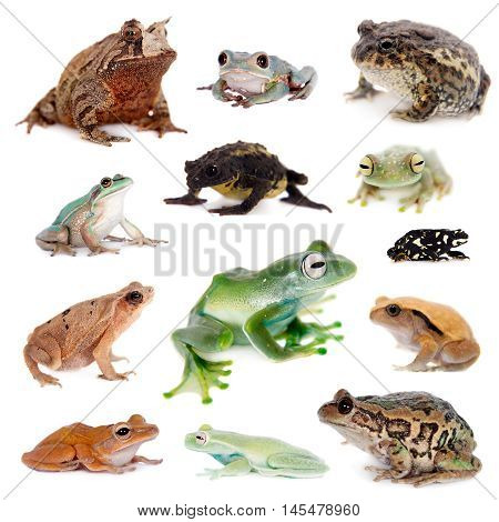 Different kind of frogs isolated on white background