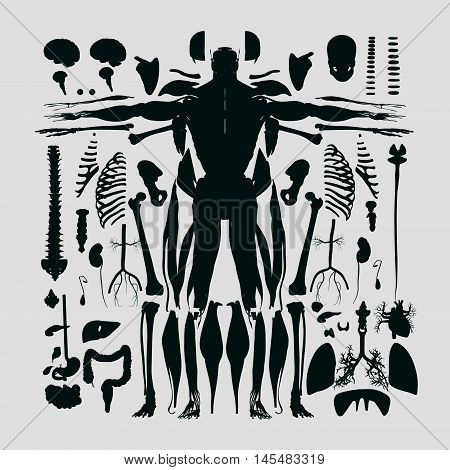 Human anatomy flat lay illustration of body parts, exploded view, deconstructed, dissected.