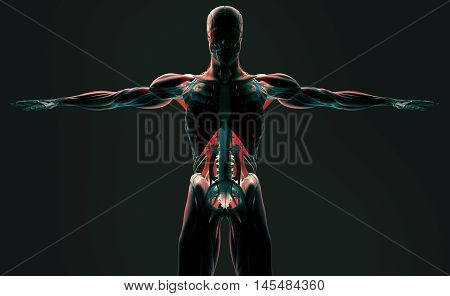 Human anatomy upper body detail. Futuristic scan technology with xray-like view of human body. Torso and skeleton front. Vibrant colors. Xray-like. 3d illustration
