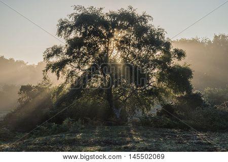 Beautiful Sunrise Landscape Of Sun Beams Shining Through Tree With Golden Glow All Around