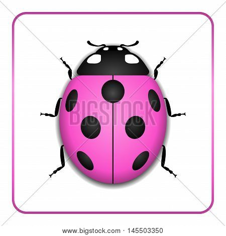 Ladybug small icon. Pink lady bug sign isolated on white background. 3d volume design. Cute colorful ladybird. Insect cartoon beetle. Symbol of nature spring or summer. Vector illustration