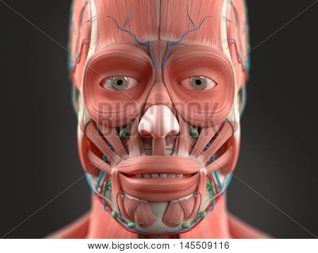 Human anatomy face and head close-up showing eyes, muscular system lips, vascular system on a dark background. 3d illustration