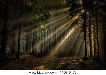 Coniferous forest in the early morning - sun beams in fog haze