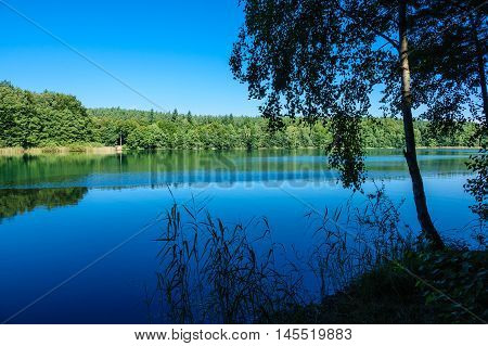 Landscape on a lake with trees and blue sky.