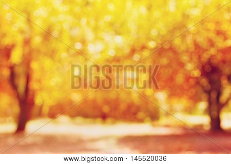 Autumn trees in park out of focus, natural bokeh background or wallpaper.