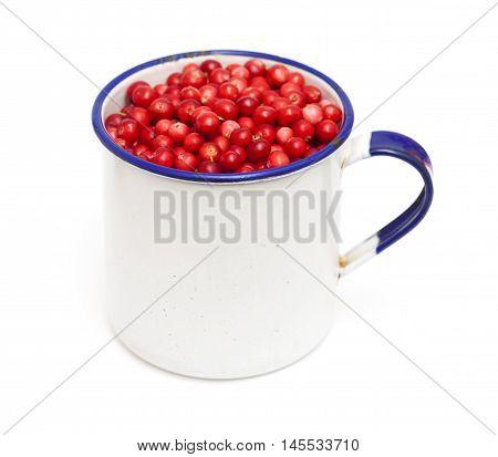 Freshly Piced Lingonberries