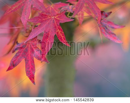 Maple Leaves In Various Autumn Colors